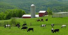 Dairy farms : we didn't have mountains, but this looks remarkably similar to the one I grew up on, in NC. Priceless.