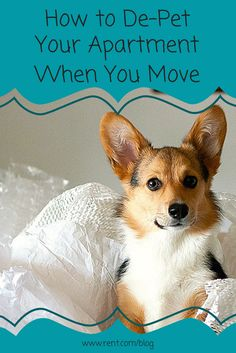 Pets are messy, and they can make moving out of your apartment a little challenging. Instead of getting charged for your pet's mess, take some time to de-pet your apartment before your move out! #pets #cleaning