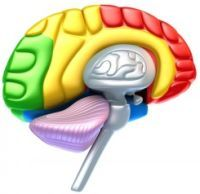 HOW THE BRAIN REMEMBERS PLEASURE: IMPLICATIONS FOR ADDICTION  Key details of the way nerve cells in the brain remember pleasure are revealed in a study by University of Alabama at Birmingham (UAB) researchers published today in the journal Nature Neuroscience.  http://www.sciencedaily.com/releases/2013/08/130825171530.htm