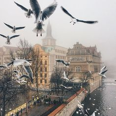 Prague, Czech Republic #prague #czechrepublic by @vetrana
