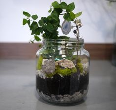 16 Best Canning Jar Terrarium At Sunnyvale Library Images Canning