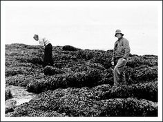 Ed Ricketts and his girlfriend collect specimens on the outer shores of Vanvouer Island, Canada in 1946 | vis BeyondTheOuterShores.com Cannery Row, Blueberry Bushes, Left Coast, Dont Call Me, Historical Pictures, Documentaries, Folk, Canada, Island