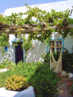 Cottage with Grape Vines & Hammock, Teguise, lanzarote, Canary islands All Original Photography by http://vwcampervan-aldridge.tumblr.com