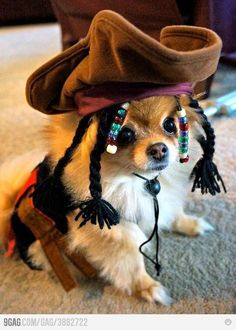 Dog dressed as Captain Jack Sparrow