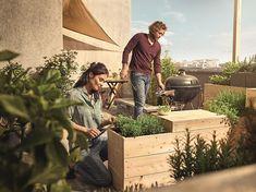 Pěstování celeru   Prima nápady Couple Photos, Couples, Urban Gardening, Couple Shots, City Gardens, Couple Photography, Couple, Couple Pictures, Urban Homesteading