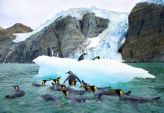 Penguins playing where the tropical Island Tavalu Island and the arctic Georgia Island connects