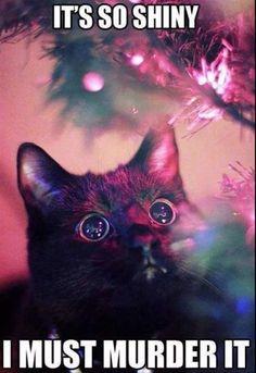 die Katze sieht wie hypnotisiert den Tannenbaum lustige Weihnachtsgrüße