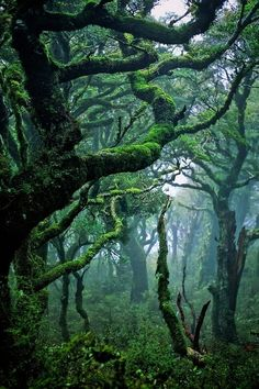 Hoh Rain Forest In Washington State