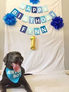 Wife may have gone a little overboard for her first dog's first birthday. Worth it. http://ift.tt/2j6mvpD