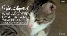 This Squirrel Was Adopted By A Cat And What He Learned Will Surprise You