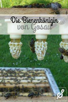 Jedes Bienenvolk braucht eine Königin, da hat die Natur ganz klare Regeln. Und weil die Biene ein enorm bedeutungsvoller Bestandteil unseres Ökosystems ist, hat unsere Imkerin Ingrid Schmaranzer begonnen, Bienenköniginnen zu züchten. Enorm, Outdoor Decor, People, Nature