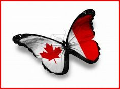 Canadian Butterfly - wings, butterfly, white, red, canada, flag