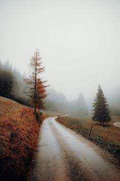 Autumn and Halloween all year long — Moody days in Austria by Daniel J. Schwarz Plant Images, Nature Images, Nature Photos, Book Flowers, Flowers Nature, Beautiful Roads, Beautiful World, Landscape Photography, Nature Photography