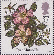 Roses 37p Stamp (1991) 'Mutabilis'