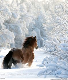 Beautiful horse running in the snow. Winter wonderland with tree branches laden in snow and ground covered all the way to the horses knees. All The Pretty Horses, Beautiful Horses, Animals Beautiful, Beautiful Beautiful, Absolutely Stunning, Animals And Pets, Cute Animals, Wild Animals, Majestic Horse