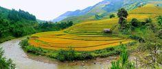 Terraced rice fields in Mu Cang Chai by khoitran. Please Like http://fb.me/go4photos and Follow @go4fotos Thank You. :-)