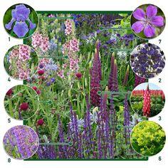 Hardy Perennials, Hardy Plants, Flowers Perennials, Planting Flowers, Grands Pots, Full Sun Plants, Cottage Garden Plants, Planting Plan, Home Flowers