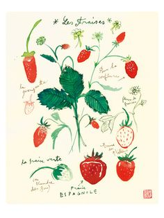 Strawberries poster, Watercolor fruits, kitchen decor, botanical print, Food art, Red. $25.00, via Etsy.