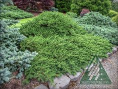 The Amazing World of Conifers Evergreen Garden, Warm Spring, Creepers, Dream Garden, The Locals, Shrubs, Dwarf, Landscape, Miniature