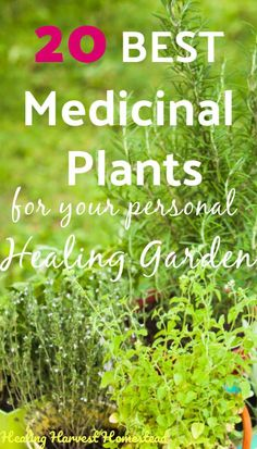 20 Medicinal Herbs to Grow (Make Your Own Herbal Remedies with Plants You Grow!) — Home Healing Harv - Having an herb garden filled with medicinal plants is a way to grow your own healing garden where y -