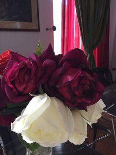 Le mie Rose!