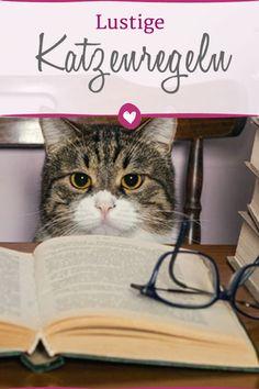 Katzen haben Regeln zu befolgen - und zwar eigens auferlegte. Welche lustigen Leitsätze Samtpfoten befolgen.