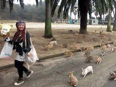 Okunoshima, Japan's bun-bun island: to visit! To bring: picnic blanket and baby carrots. :)