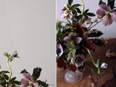 hellebore_anemones by Sarah Ryhanen