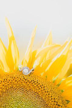 Sunflower Field Engagement Photos -- The Overwhelmed Bride Wedding Blog
