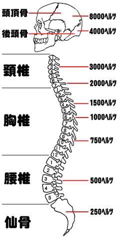 頭骨・背骨と、共振する音の周波数