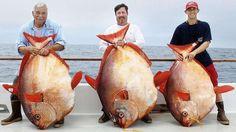 Angler mit Gotteslachsen