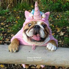 Un Puggicornio sigueme!!! Soy unicornios fans