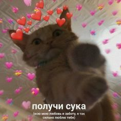 Cat Memes, Funny Memes, Jokes, Cute Backgrounds For Iphone, Hello Memes, Russian Memes, Heart Meme, Cute Texts, My Emotions