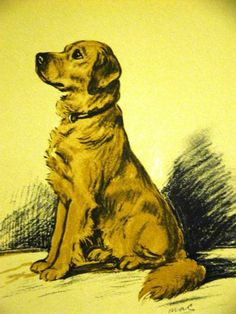 Lucy Dawson 1937 EVERYONE'S FAVORITE-GOLDEN RETRIEVER Dog Art Print Matted