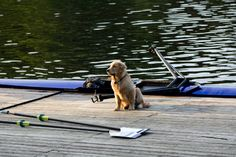 Reminds me of my pup. tries to get in the boat and then waits for me on the docks to come back.