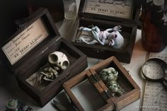 Three boxed specimens from El Dodo Albino Specimen Collection. Polymer Clay Kunst, Polymer Clay Crafts, Polymer Clay Painting, Halloween Clay, Halloween Crafts, Halloween Night, Halloween Drawings, Clay Monsters, Clay Box