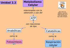 5 maneras de luchar tasa de metabolismo basal definicion