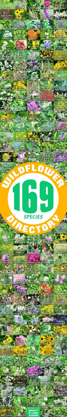 Wildflower Directory from University of Illinois Extension