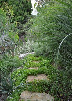 Plant of the month | Native Violet | Secret Gardens | attractive secret pathway