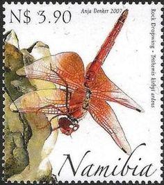 Orange-winged Dropwing (Trithemis kirbyi)