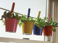 Container Gardening Ideas - Bing Images