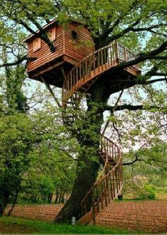 tree house! with a spiral staircase - I want one!