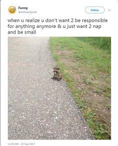 Funny Animal Tweets – 17 Pics