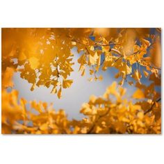 Trademark Fine Art Ginkgophytes Canvas Art by Philippe Sainte-Laudy, Size: 12 x 19, Multicolor