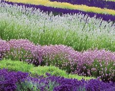 Color Pallette for wedding colors, lavender, green and white.