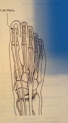 images about Spleen Meridian Acupressure Points Chart, Reflexology, Acupuncture, Abstract, Artwork, Image, Psicologia, Summary, Work Of Art