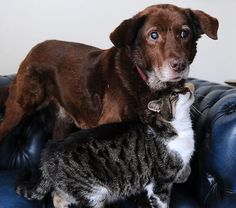 Former stray cat lovingly guides blind dog