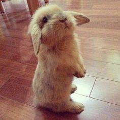 Hallo Mama, darf ich bitte raus ins Grüne? Ich möchte rumtoben.