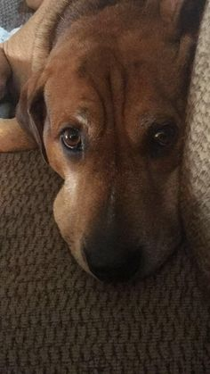 Liam loves lazy days #dogpictures #dogs #aww #cuteanimals #dogsoftwitter #dog #cute