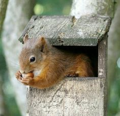 Animals And Pets, Baby Animals, Funny Animals, Cute Animals, Cute Squirrel, Baby Squirrel, Squirrels, Squirrel Feeder, Raccoons